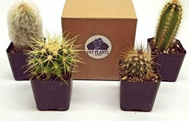 4 different cactus varieties for your collection.