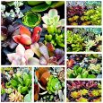 Enjoy an assortment of 10 different succulent cuttings with no 2 alike.