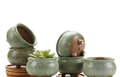 These cute succulent pots come with bamboo trays and are a set of six.