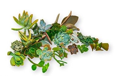 20 unique succulent cuttings from Fat Plants that are easy to grow no 2 alike.