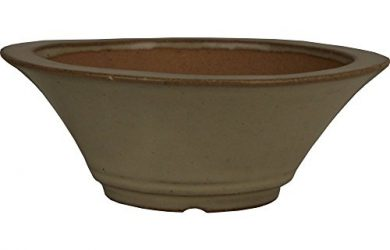 Succulent Bonsai pot from Yixing China.