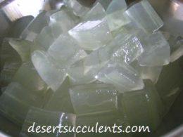 Learn how to make Aloe vera gel.