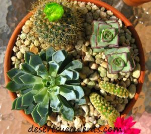 Here are some succulent care tips.