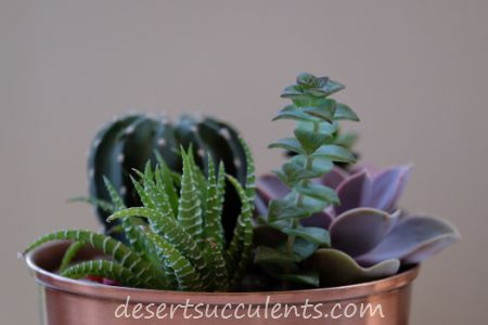 Beautiful succulent plants for your home.