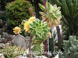 There are hundreds of types of succulents.