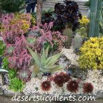 Many varieties of succulents.
