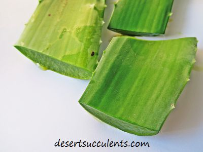 Aloe Vera for Skin Care and Other Conditions