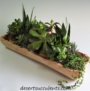 Folding Potting Bench for Succulents