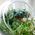 Making a succulent terrarium is very easy with the right plants and a stylish container.