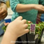 Succulent gardening with children guide.