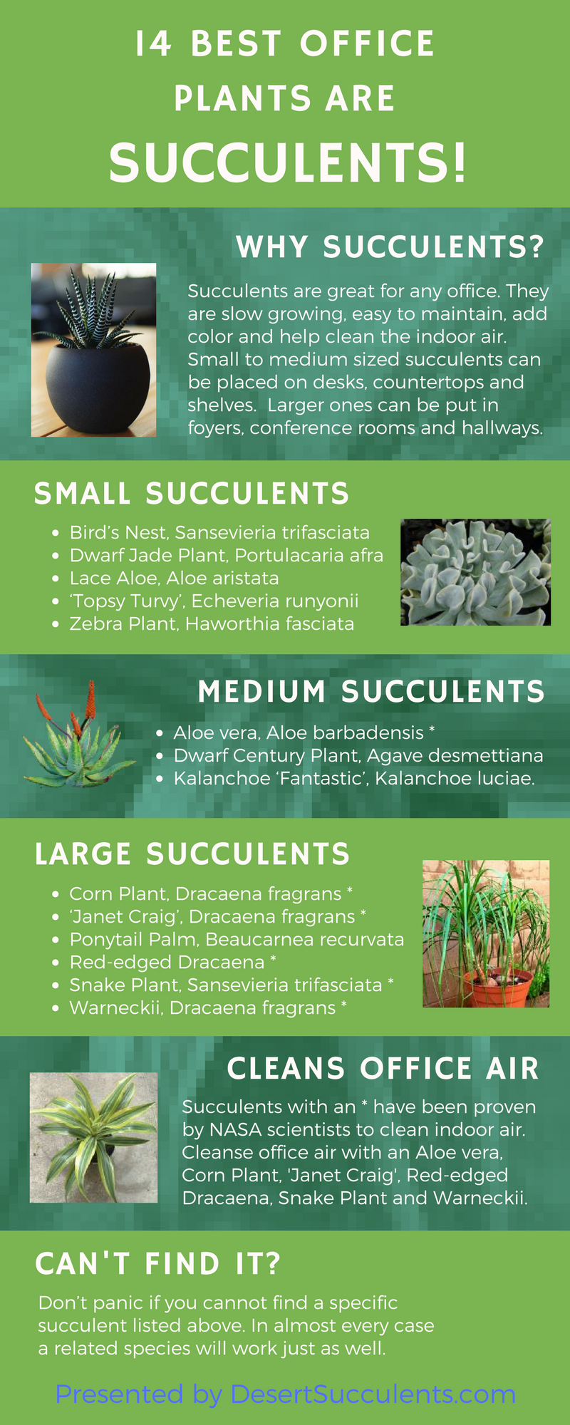 The best office plants are succulents. These are 14 succulents that are easy to take care of, look great and clean indoor air.