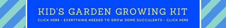 Kid's garden growing kit. Teach children to grow plants including succulents.