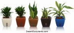 Plant Air Purifier pots accelerate the plant indoor air cleansing substantially.