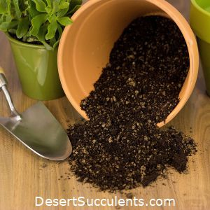 The best cactus and succulent soil will help your succulents thrive.