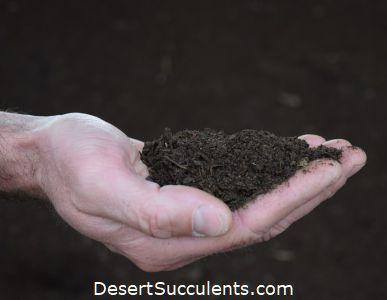 Best Succulent Fertilizer For Cactus And Succulents Desert