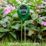 The Bodear 3-in-1 Soil Moisture Meter is the best for succulents.