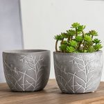 Great looking clay succulent pot etched with birds and branches.