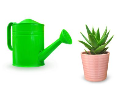 Watering An Aloe Vera Plant The Right Way